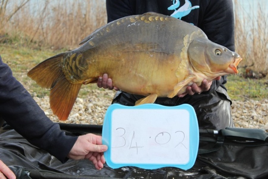 Fish 66 - Stocked at 34lb 2oz