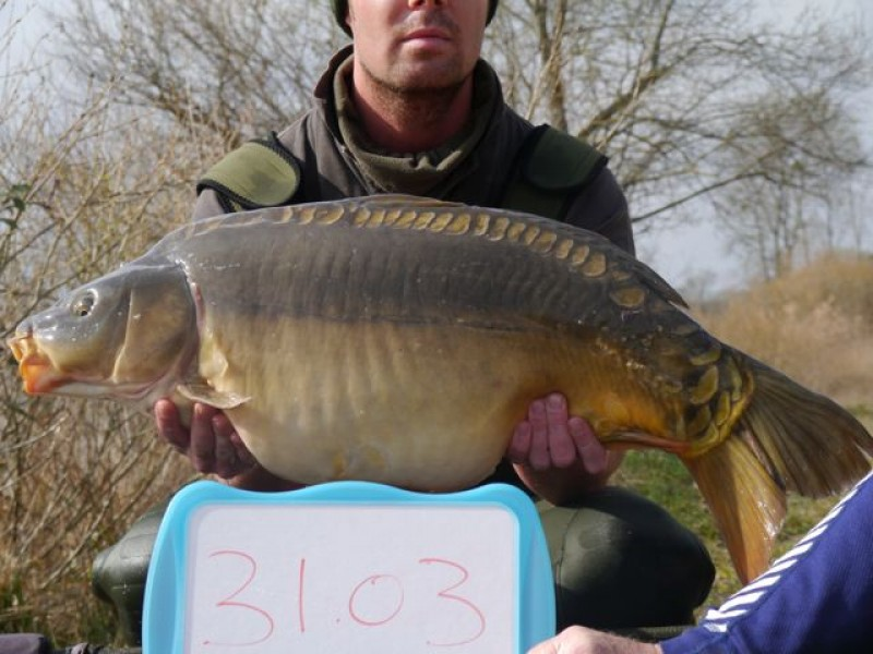 Fish 122 - Stocked at 31lb 3oz