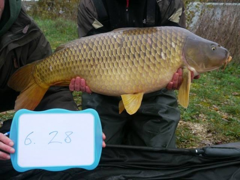 Stocked 28lb January 2014